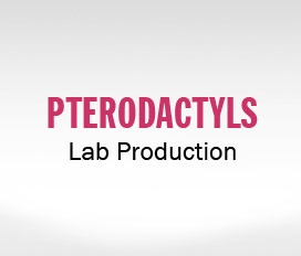 Pterodactyls Lab Production